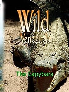 Bittorrent free movie downloads The Capybara [640x640]