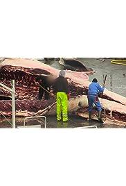 Schützen oder Jagen? - Kampf um Islands Wale