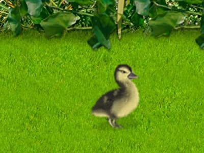 Movie downloading sites for free Duck, Duck, June by [2k]