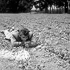 """James Dean watching his crop grow in """"East of Eden."""" 1955 Warner / MPTV"""