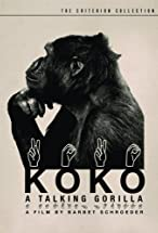 Primary image for Koko: A Talking Gorilla