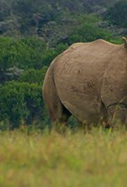 Northern White Rhino Poster
