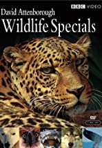 David Attenborough Wildlife Specials