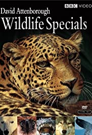 David Attenborough Wildlife Specials Poster