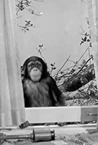 Primary photo for Judy the Chimpanzee