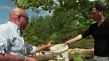 Virginia: Cicadas & Cow Nose Rays