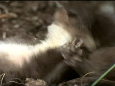 Watch free movie tv links Meet the Marten by none [480x800]