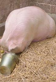 Pig-Hoo-o-o-o-ey Poster