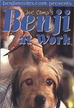 Benji at Work