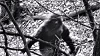 The Mystery of Bigfoot