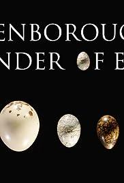 Attenborough's Wonder of Eggs Poster