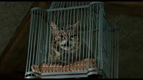 Stuffy businessman Tom Brand (Kevin Spacey) finds himself trapped inside the body of his family's cat. If any hope exists of returning to his family as the husband and father they deserve, Tom will have to learn why he has been placed in this peculiar situation and the great lengths he must go to earn back his human existence.