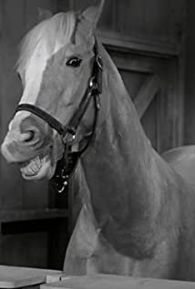 Mister Ed New Picture - Celebrity Forum, News, Rumors, Gossip