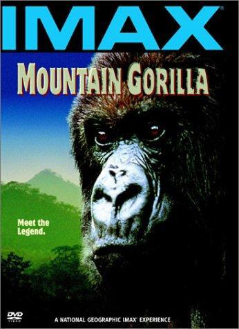 Image Khỉ đột núi