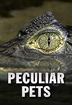 Peculiar Pets