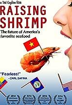 Raising Shrimp