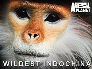 Where to stream Wildest Indochina