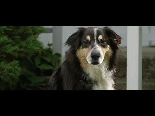 Bark Ranger Official Trailer (2015)
