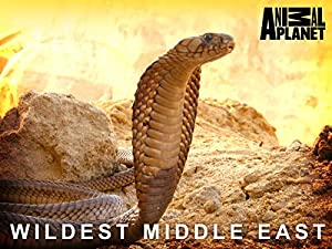 Where to stream Wildest Middle East