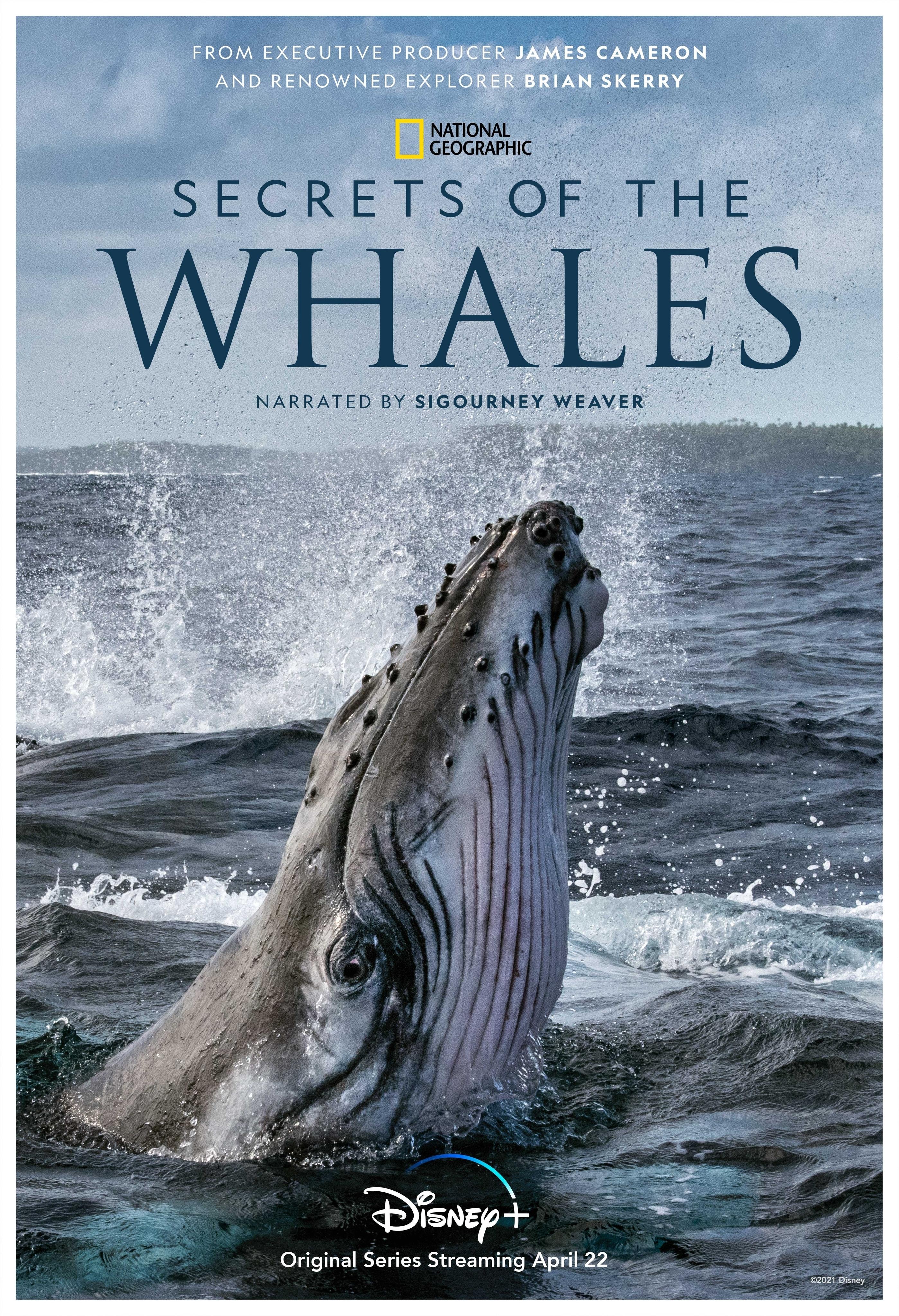 Secrets of the Whales (TV Mini-Series 2021) - IMDb