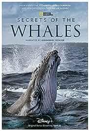 Secrets of the Whales - Season 1 HDRip english Full Movie Watch Online Free MovieRulz