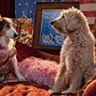 Tom Everett Scott and Bonnie Somerville in Pup Star (2016)