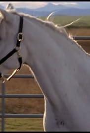 Divorce Horse Poster