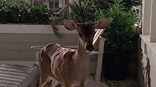 Deer God