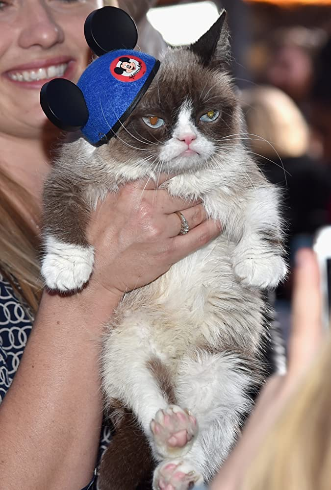 Grumpy Cat at an event for Cinderella 2015