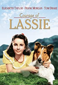 Primary photo for Courage of Lassie