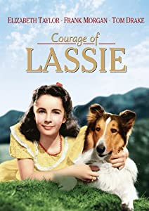 Watch mpeg4 movies Courage of Lassie USA [2048x1536]