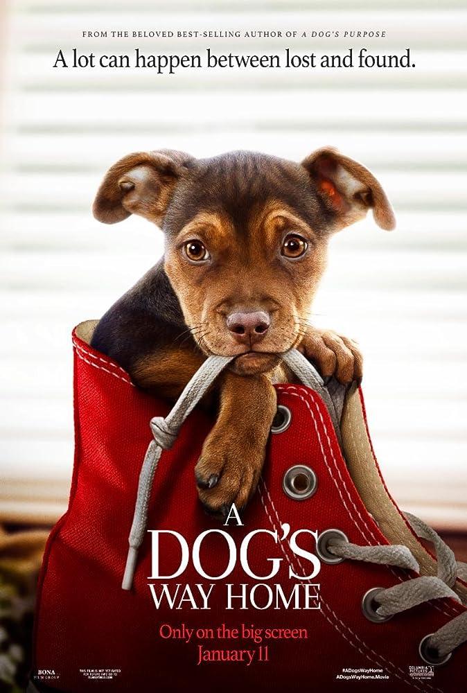 ძაღლის გზა შინისაკენ / A DOG'S WAY HOME