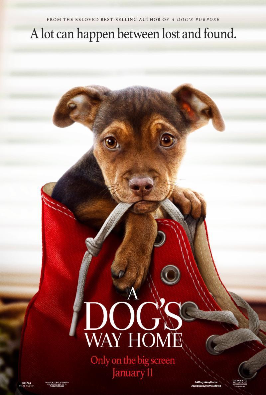 A Dog's Way Home (2019) BluRay 480p, 720p & 1080p