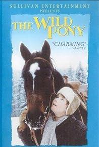 Primary photo for The Wild Pony