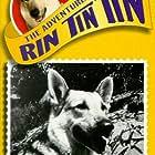 Rin Tin Tin II