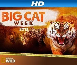 Where to stream Big Cat Week