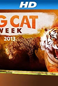Primary photo for Big Cat Week
