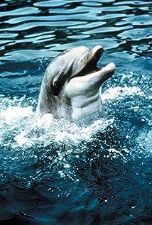 Flipper Picture