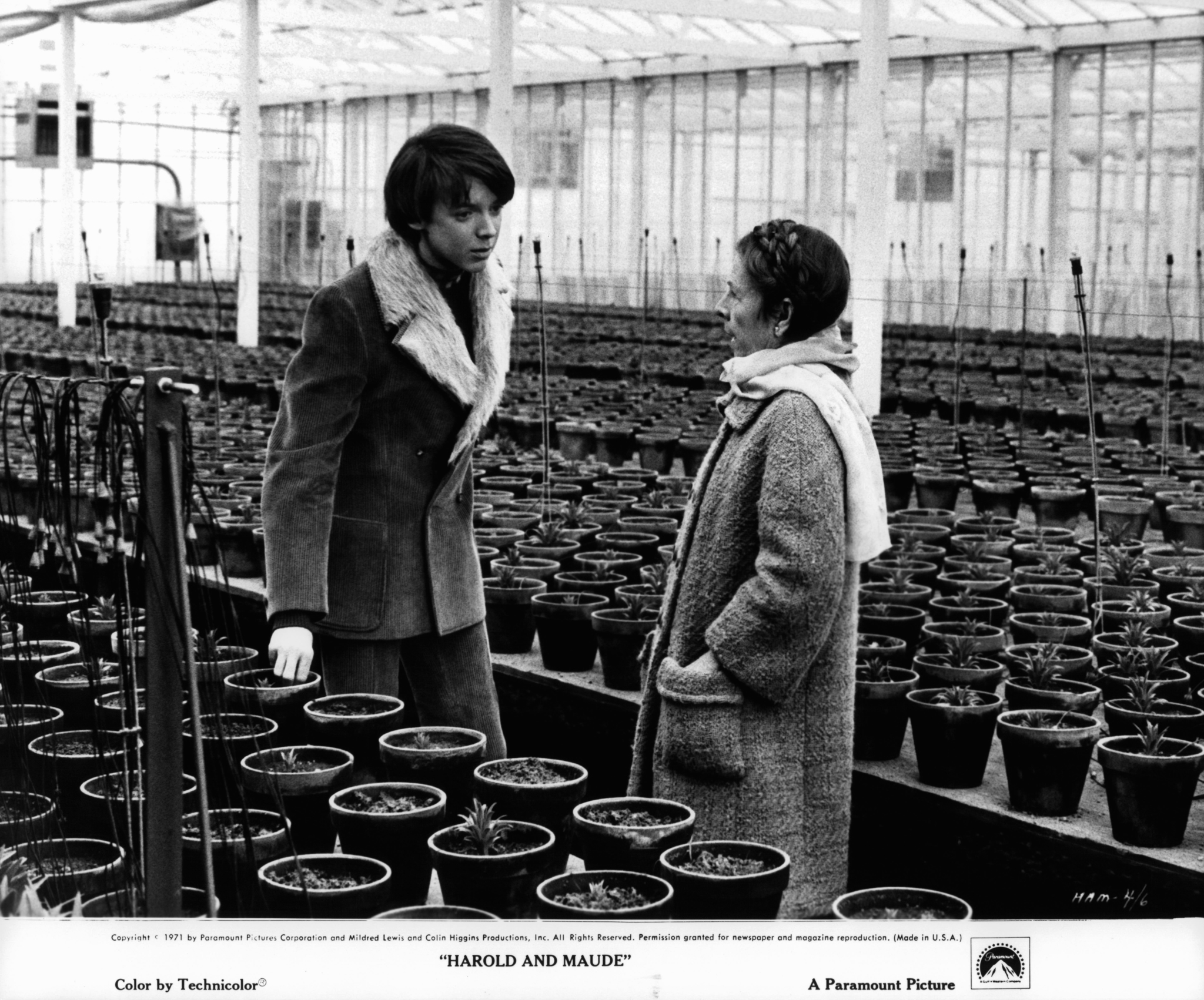 harold and maude (1971) movie download