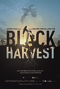 Primary photo for Black Harvest