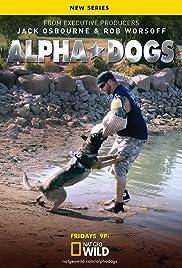 alpha dog training boronia reviews