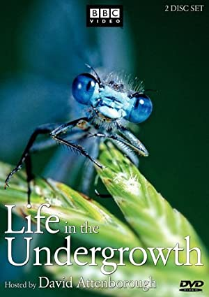 Where to stream Life in the Undergrowth