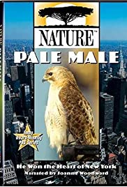 Pale Male Poster