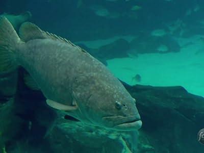 xvid movie downloads Fishn' Whole [BDRip]