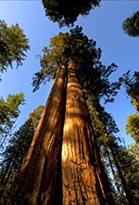 Primary photo for Cedar Sequoia International