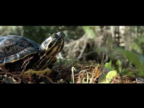 Turtle Tale 2015 Imdb