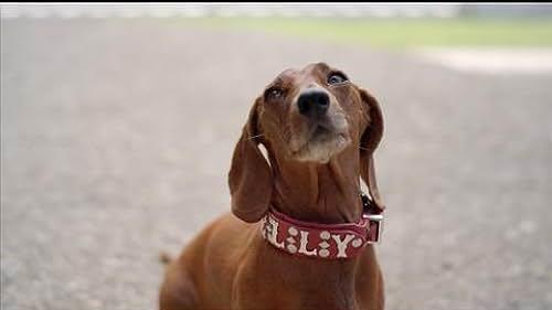 Trailer 2 for Wiener Dog Internationals