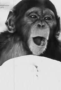 Primary photo for Animal Intelligence