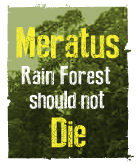 Meratus Rain Forest Should Not Die