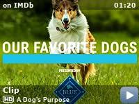 A Dog S Purpose 2017 Imdb